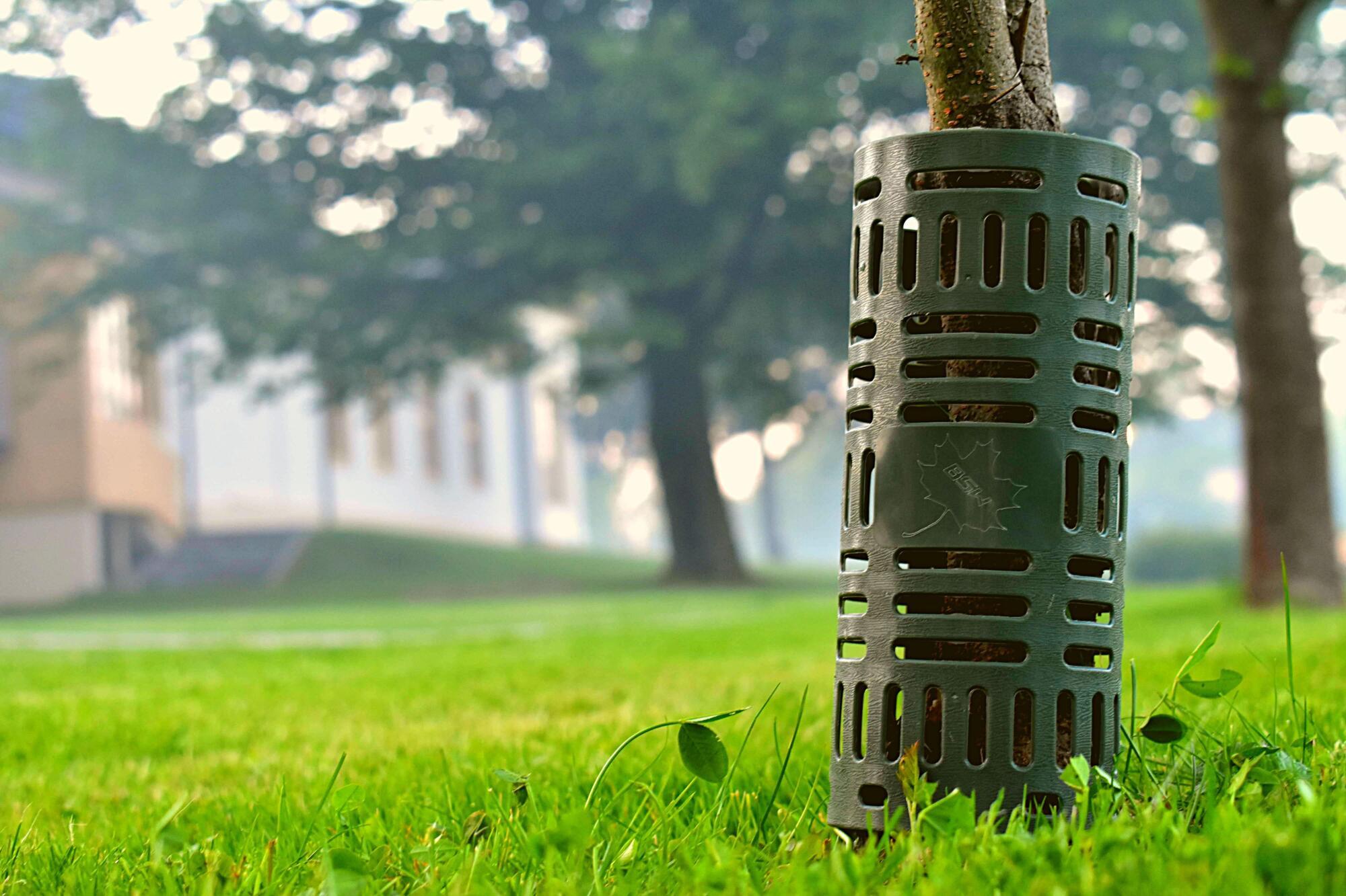 osłona drzew miejskich