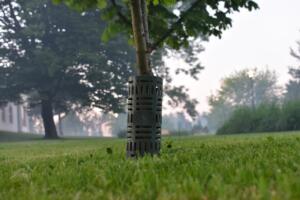 osłonka na drzewa